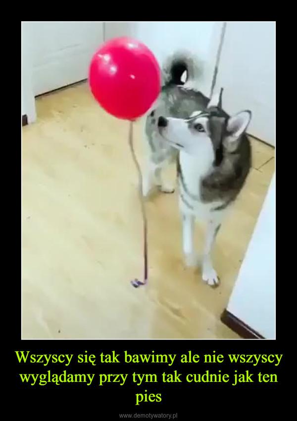 Wszyscy się tak bawimy ale nie wszyscy wyglądamy przy tym tak cudnie jak ten pies –