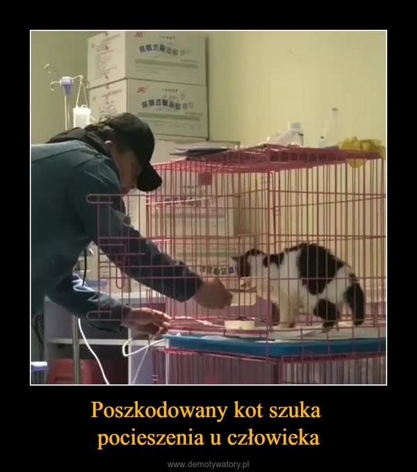 Poszkodowany kot szuka pocieszenia u człowieka –