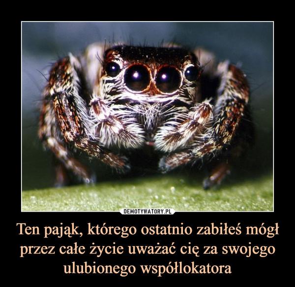 Ten pająk, którego ostatnio zabiłeś mógł przez całe życie uważać cię za swojego ulubionego współlokatora –