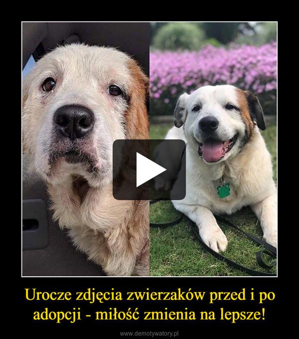 Urocze zdjęcia zwierzaków przed i po adopcji - miłość zmienia na lepsze! –