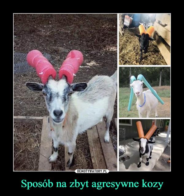 Sposób na zbyt agresywne kozy –