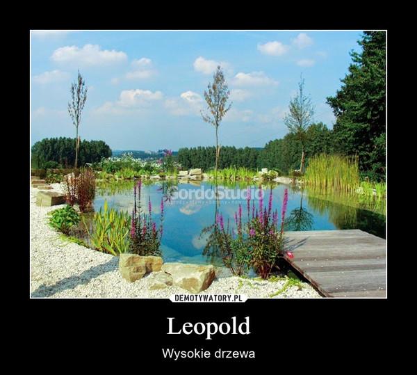 Leopold – Wysokie drzewa