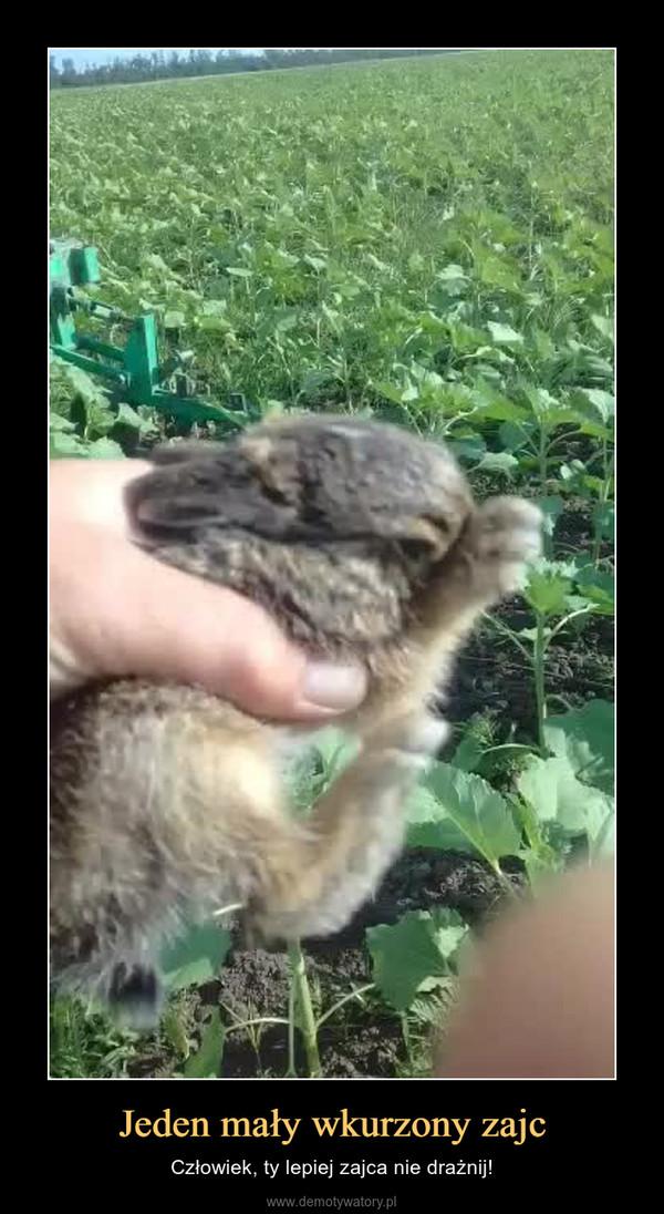 Jeden mały wkurzony zajc – Człowiek, ty lepiej zajca nie drażnij!
