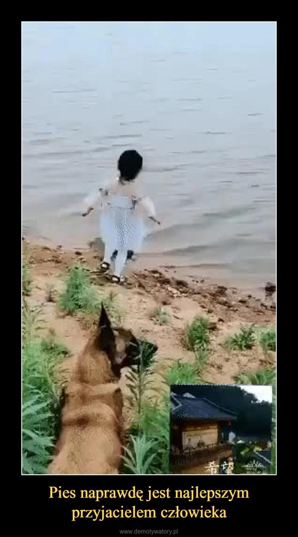 Pies naprawdę jest najlepszym przyjacielem człowieka –