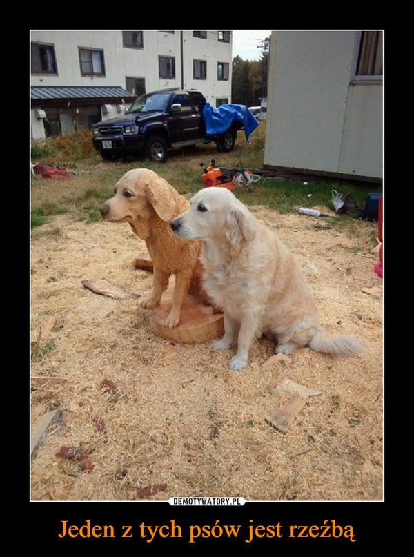 Jeden z tych psów jest rzeźbą –