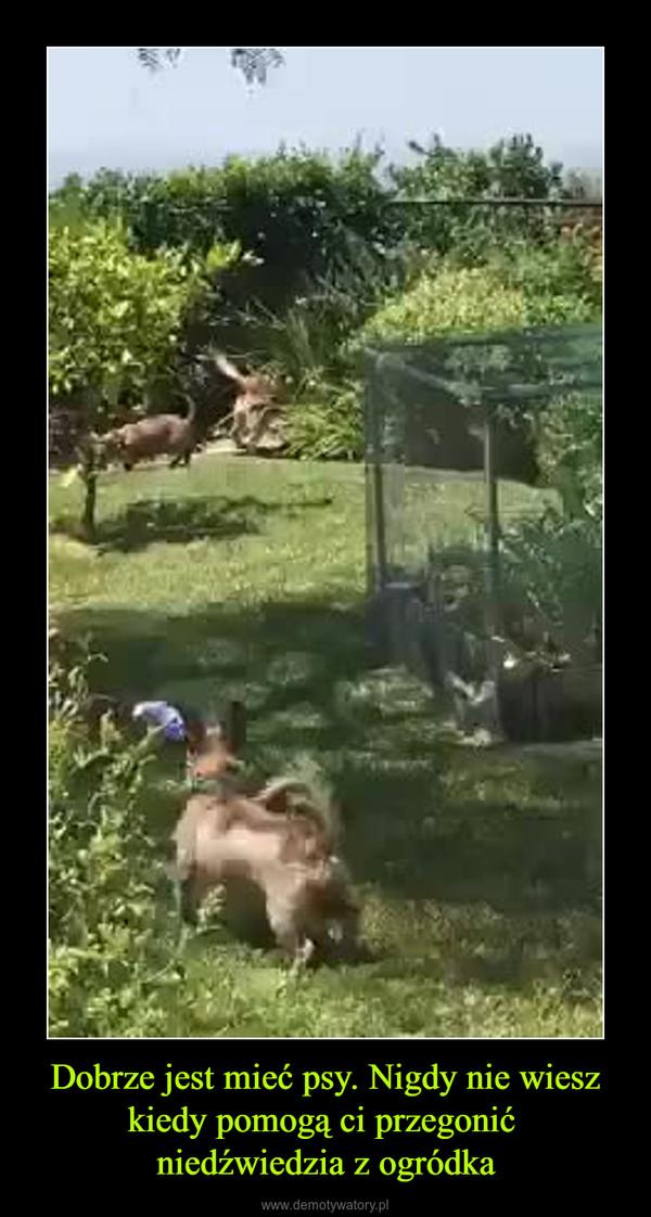 Dobrze jest mieć psy. Nigdy nie wiesz kiedy pomogą ci przegonić niedźwiedzia z ogródka –