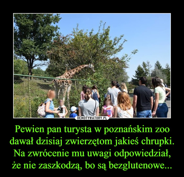 Pewien pan turysta w poznańskim zoo dawał dzisiaj zwierzętom jakieś chrupki. Na zwrócenie mu uwagi odpowiedział, że nie zaszkodzą, bo są bezglutenowe... –