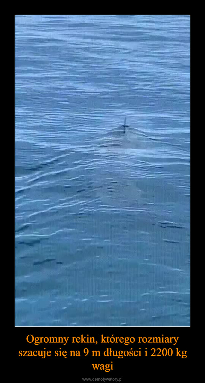 Ogromny rekin, którego rozmiary szacuje się na 9 m długości i 2200 kg wagi –