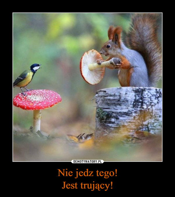 Nie jedz tego!Jest trujący! –