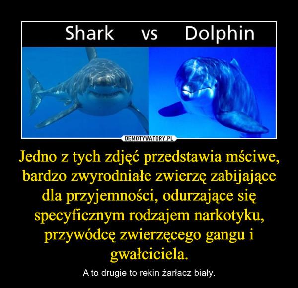 Jedno z tych zdjęć przedstawia mściwe, bardzo zwyrodniałe zwierzę zabijające dla przyjemności, odurzające się specyficznym rodzajem narkotyku, przywódcę zwierzęcego gangu i gwałciciela. – A to drugie to rekin żarłacz biały.