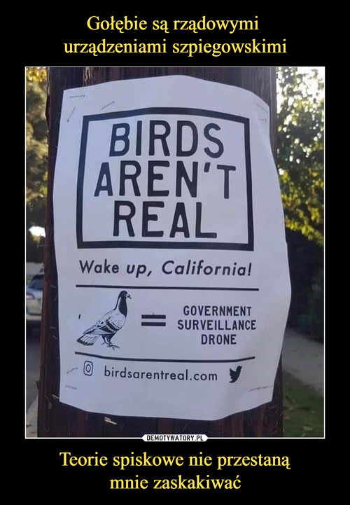 Gołębie są rządowymi  urządzeniami szpiegowskimi Teorie spiskowe nie przestaną mnie zaskakiwać