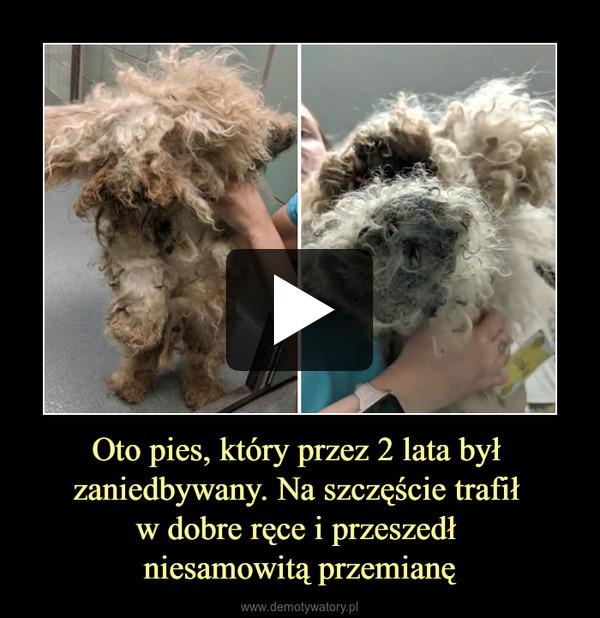 Oto pies, który przez 2 lata był zaniedbywany. Na szczęście trafił w dobre ręce i przeszedł niesamowitą przemianę –