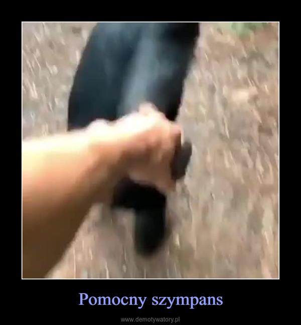 Pomocny szympans –