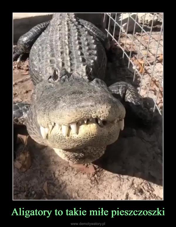 Aligatory to takie miłe pieszczoszki –