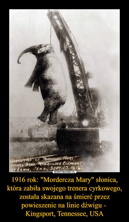 """1916 rok: """"Mordercza Mary"""" słonica, która zabiła swojego trenera cyrkowego, została skazana na śmierć przez powieszenie na linie dźwigu -  Kingsport, Tennessee, USA"""