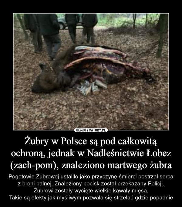 Żubry w Polsce są pod całkowitą ochroną, jednak w Nadleśnictwie Łobez (zach-pom), znaleziono martwego żubra – Pogotowie Żubrowej ustaliło jako przyczynę śmierci postrzał serca z broni palnej. Znaleziony pocisk został przekazany Policji.Żubrowi zostały wycięte wielkie kawały mięsa.Takie są efekty jak myśliwym pozwala się strzelać gdzie popadnie