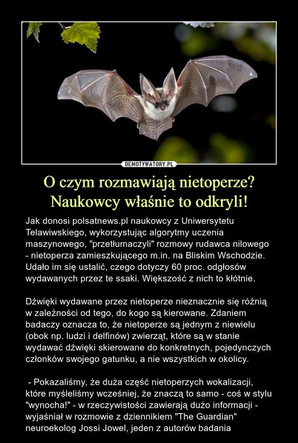 """O czym rozmawiają nietoperze?Naukowcy właśnie to odkryli! – Jak donosi polsatnews.pl naukowcy z Uniwersytetu Telawiwskiego, wykorzystując algorytmy uczenia maszynowego, """"przetłumaczyli"""" rozmowy rudawca nilowego - nietoperza zamieszkującego m.in. na Bliskim Wschodzie. Udało im się ustalić, czego dotyczy 60 proc. odgłosów wydawanych przez te ssaki. Większość z nich to kłótnie.Dźwięki wydawane przez nietoperze nieznacznie się różnią w zależności od tego, do kogo są kierowane. Zdaniem badaczy oznacza to, że nietoperze są jednym z niewielu (obok np. ludzi i delfinów) zwierząt, które są w stanie wydawać dźwięki skierowane do konkretnych, pojedynczych członków swojego gatunku, a nie wszystkich w okolicy. - Pokazaliśmy, że duża część nietoperzych wokalizacji, które myśleliśmy wcześniej, że znaczą to samo - coś w stylu """"wynocha!"""" - w rzeczywistości zawierają dużo informacji - wyjaśniał w rozmowie z dziennikiem """"The Guardian"""" neuroekolog Jossi Jowel, jeden z autorów badania"""