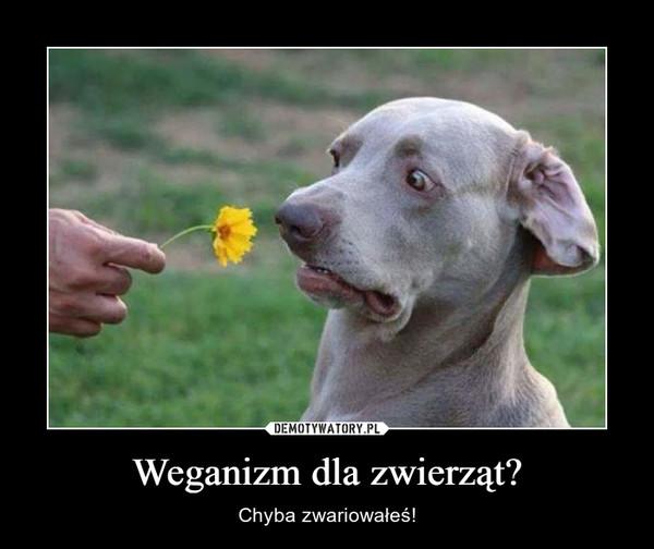 Weganizm dla zwierząt? – Chyba zwariowałeś!