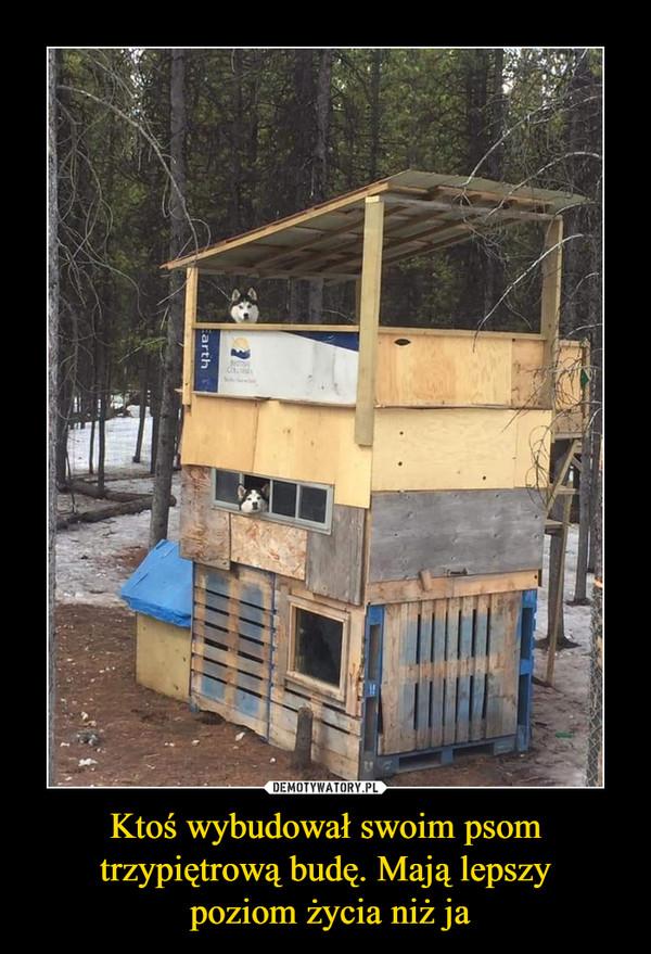 Ktoś wybudował swoim psom trzypiętrową budę. Mają lepszy poziom życia niż ja –