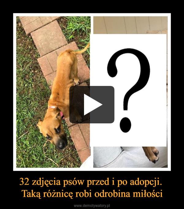 32 zdjęcia psów przed i po adopcji. Taką różnicę robi odrobina miłości –