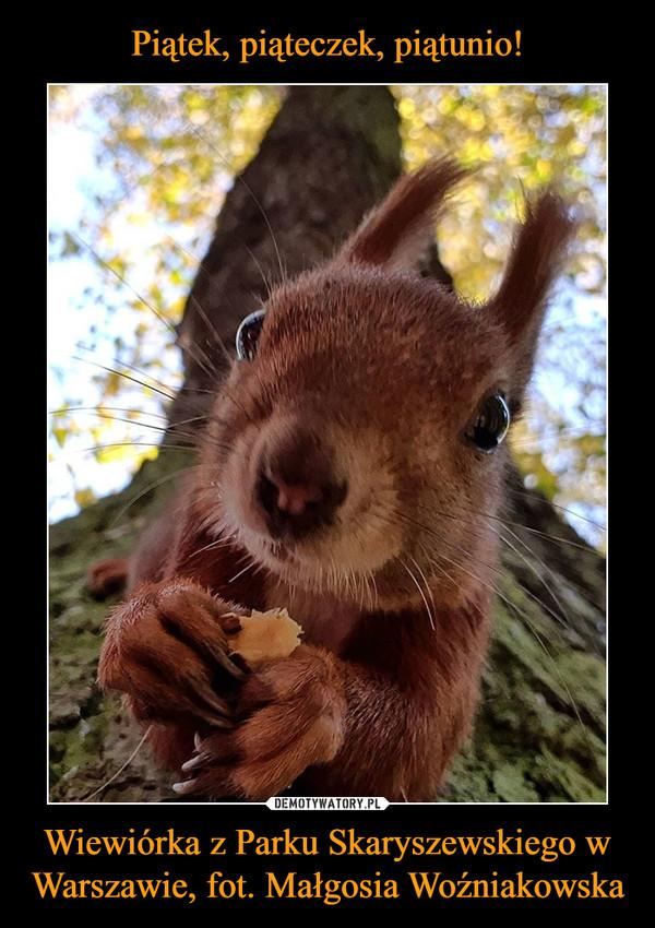 Wiewiórka z Parku Skaryszewskiego w Warszawie, fot. Małgosia Woźniakowska –