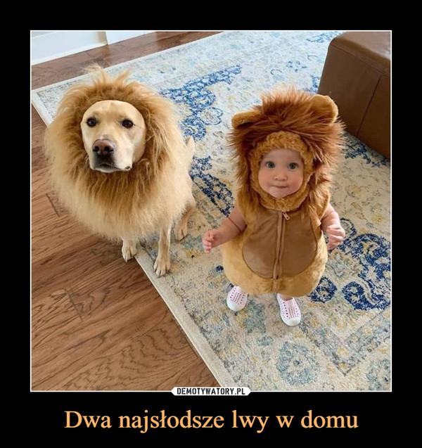 Dwa najsłodsze lwy w domu –