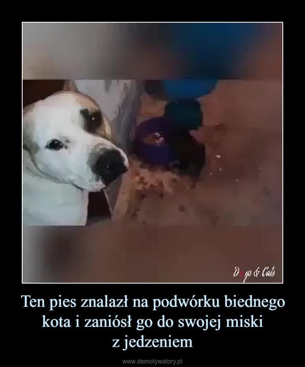 Ten pies znalazł na podwórku biednego kota i zaniósł go do swojej miskiz jedzeniem –