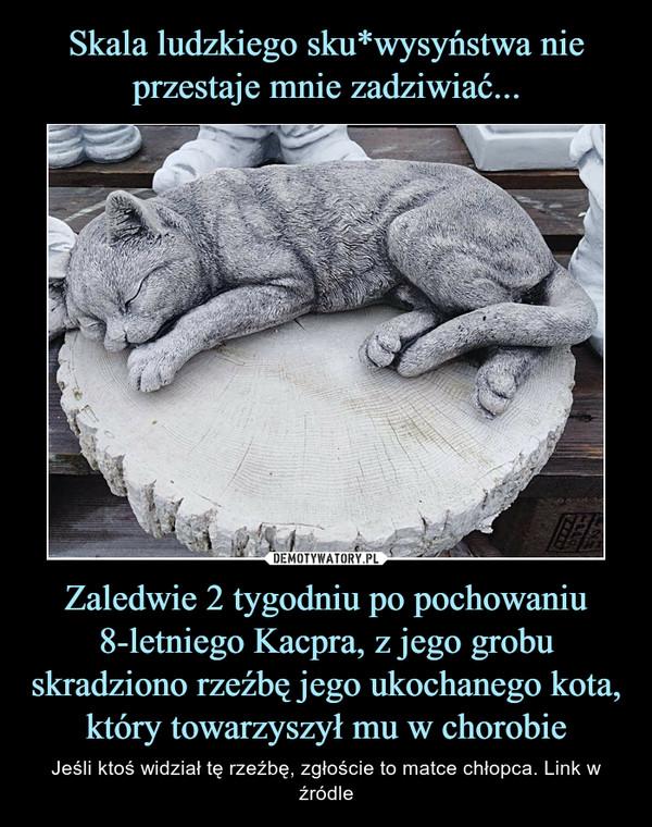 Zaledwie 2 tygodniu po pochowaniu 8-letniego Kacpra, z jego grobu skradziono rzeźbę jego ukochanego kota, który towarzyszył mu w chorobie – Jeśli ktoś widział tę rzeźbę, zgłoście to matce chłopca. Link w źródle