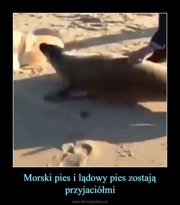 Morski pies i lądowy pies zostają przyjaciółmi –