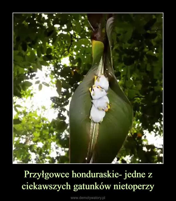 Przyłgowce honduraskie- jedne z ciekawszych gatunków nietoperzy –
