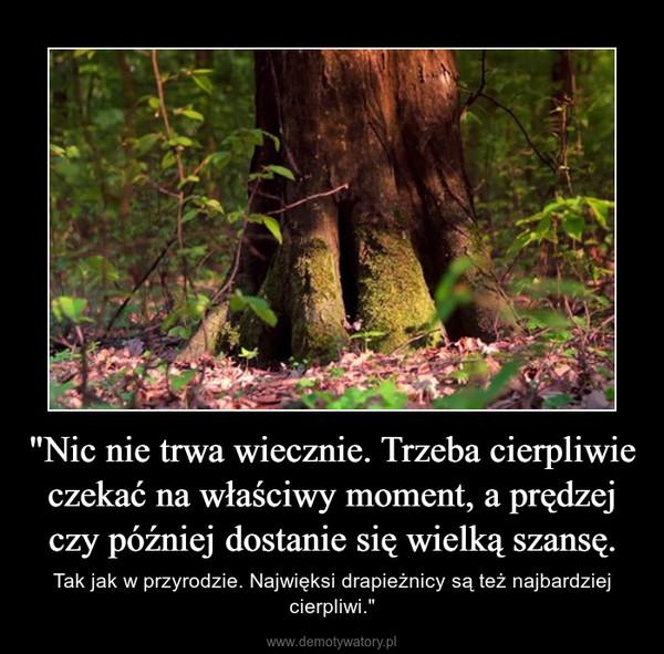 """""""Nic nie trwa wiecznie. Trzeba cierpliwie czekać na właściwy moment, a prędzej czy później dostanie się wielką szansę. – Tak jak w przyrodzie. Najwięksi drapieżnicy są też najbardziej cierpliwi."""""""
