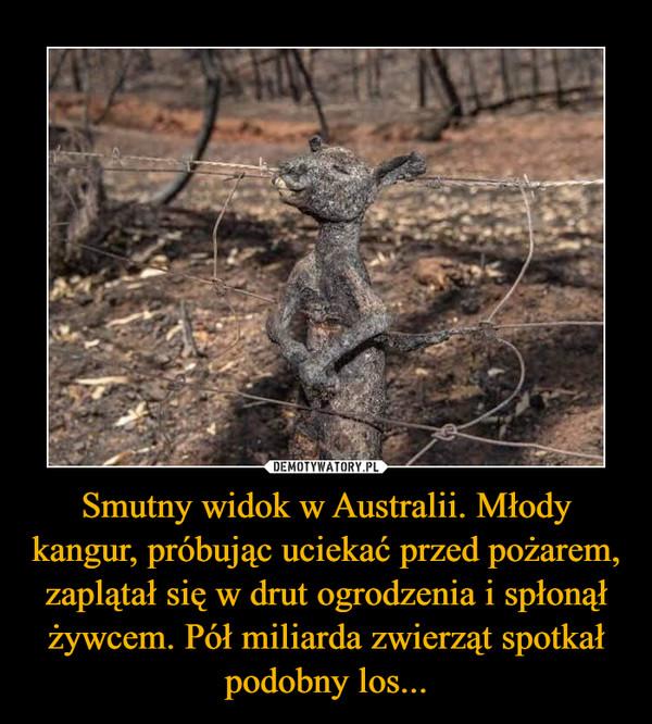 Smutny widok w Australii. Młody kangur, próbując uciekać przed pożarem, zaplątał się w drut ogrodzenia i spłonął żywcem. Pół miliarda zwierząt spotkał podobny los... –