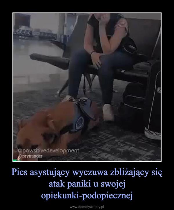 Pies asystujący wyczuwa zbliżający się atak paniki u swojej opiekunki-podopiecznej –