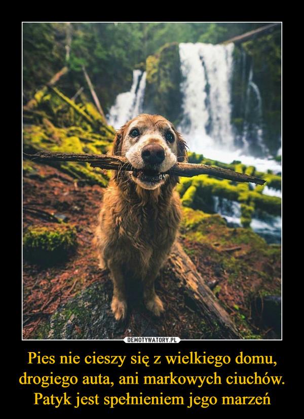 Pies nie cieszy się z wielkiego domu, drogiego auta, ani markowych ciuchów. Patyk jest spełnieniem jego marzeń –