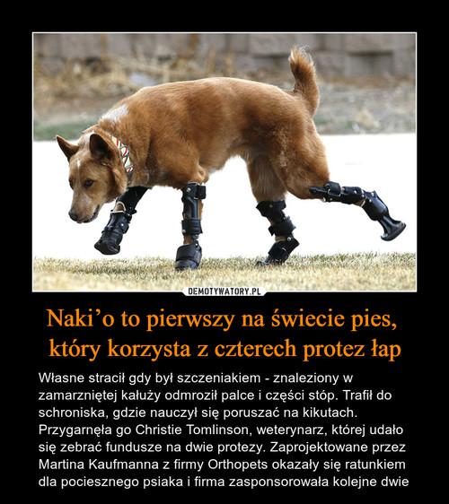 Naki'o to pierwszy na świecie pies,  który korzysta z czterech protez łap
