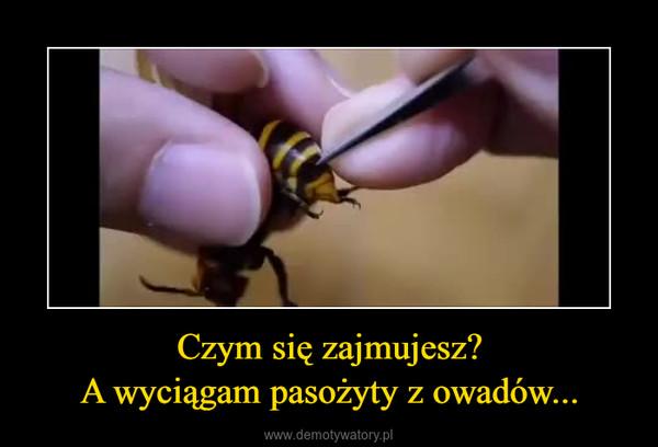 Czym się zajmujesz?A wyciągam pasożyty z owadów... –