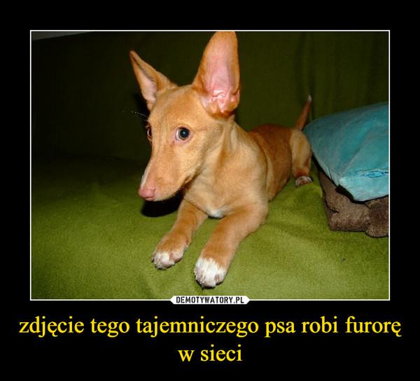 zdjęcie tego tajemniczego psa robi furorę w sieci –