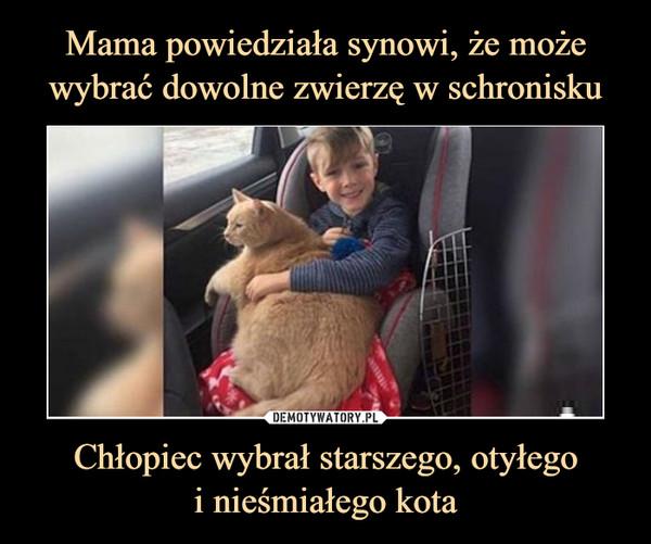 Chłopiec wybrał starszego, otyłegoi nieśmiałego kota –