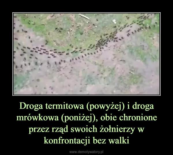 Droga termitowa (powyżej) i droga mrówkowa (poniżej), obie chronione przez rząd swoich żołnierzy w konfrontacji bez walki –