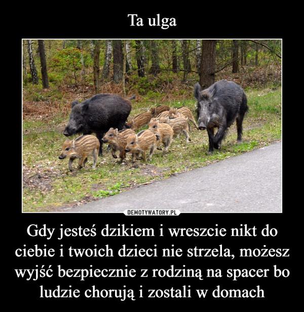 Gdy jesteś dzikiem i wreszcie nikt do ciebie i twoich dzieci nie strzela, możesz wyjść bezpiecznie z rodziną na spacer bo ludzie chorują i zostali w domach –