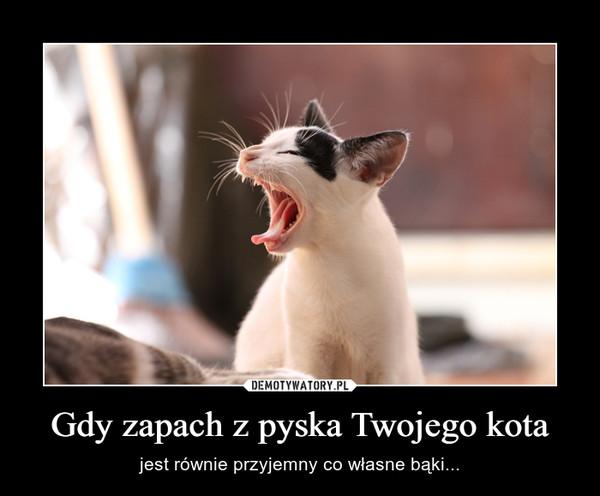 Gdy zapach z pyska Twojego kota – jest równie przyjemny co własne bąki...