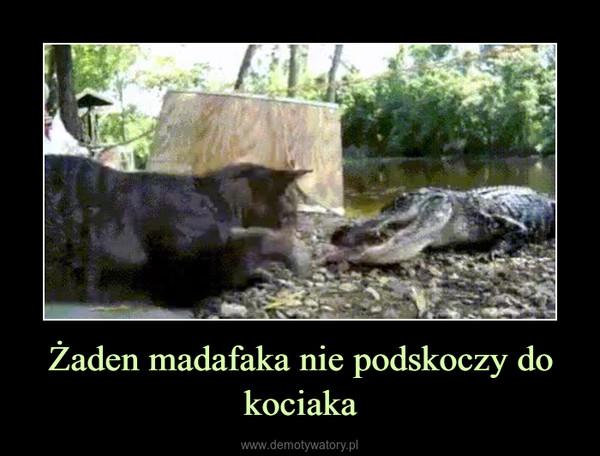 Żaden madafaka nie podskoczy do kociaka –