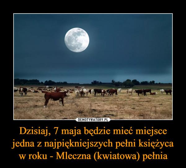 Dzisiaj, 7 maja będzie mieć miejsce jedna z najpiękniejszych pełni księżyca w roku - Mleczna (kwiatowa) pełnia –