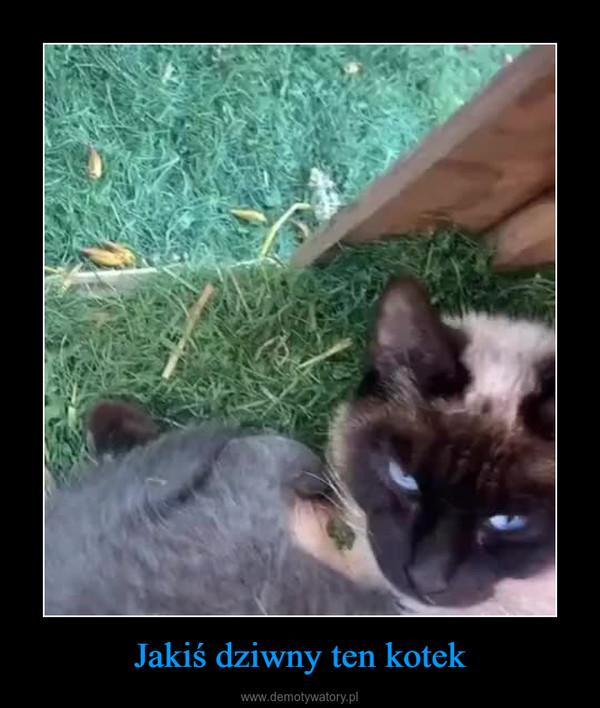 Jakiś dziwny ten kotek –