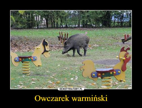 Owczarek warmiński
