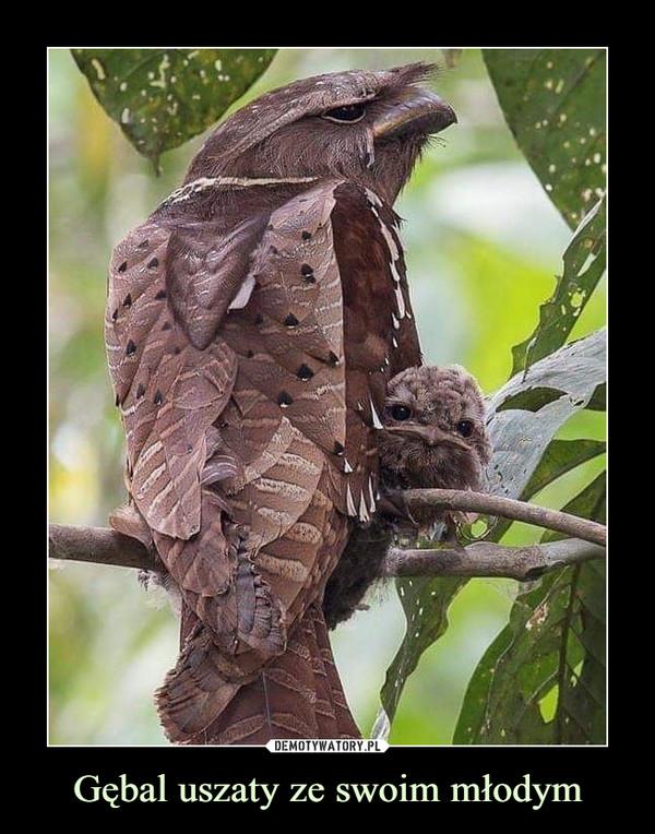 Gębal uszaty ze swoim młodym –