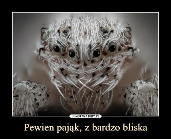 Pewien pająk, z bardzo bliska –