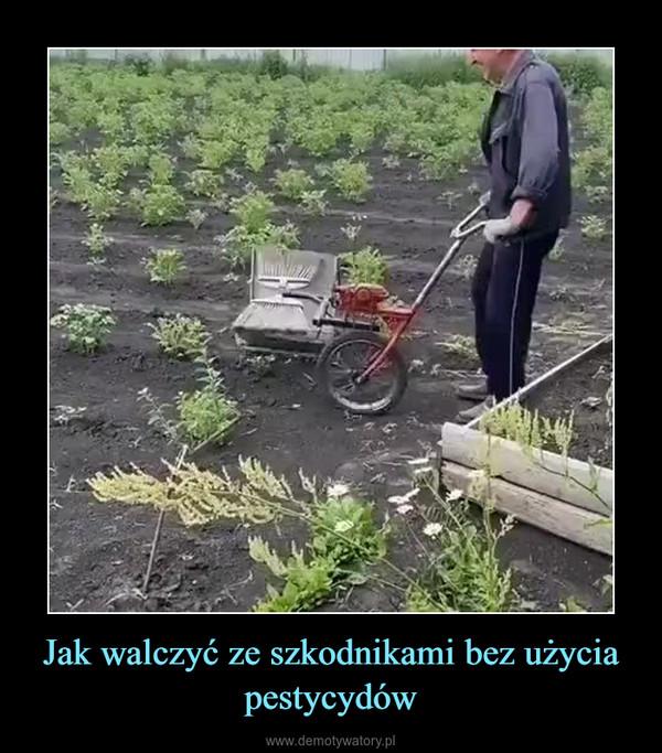 Jak walczyć ze szkodnikami bez użycia pestycydów –