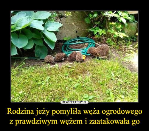 Rodzina jeży pomyliła węża ogrodowego z prawdziwym wężem i zaatakowała go