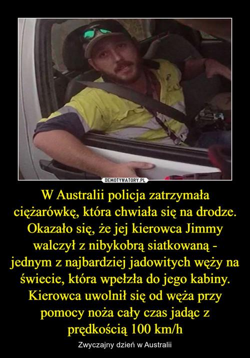 W Australii policja zatrzymała ciężarówkę, która chwiała się na drodze. Okazało się, że jej kierowca Jimmy walczył z nibykobrą siatkowaną - jednym z najbardziej jadowitych węży na świecie, która wpełzła do jego kabiny. Kierowca uwolnił się od węża przy pomocy noża cały czas jadąc z prędkością 100 km/h